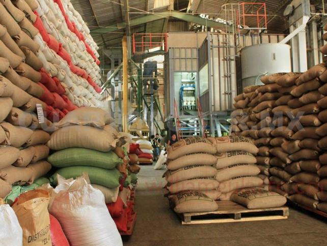 Producción de café alcanza dos mil quintales