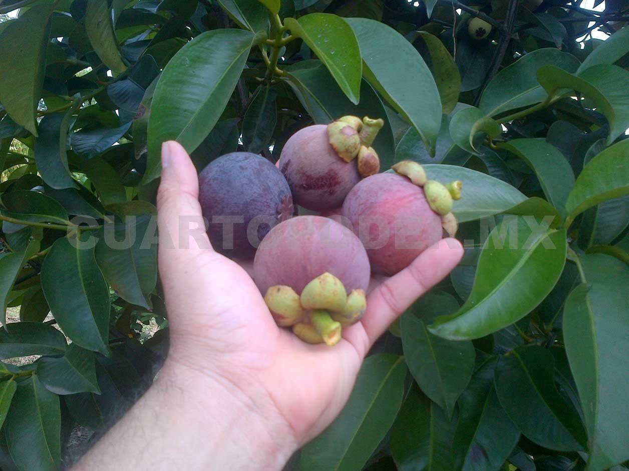 Alertan Por Tráfico Ilegal De Frutas