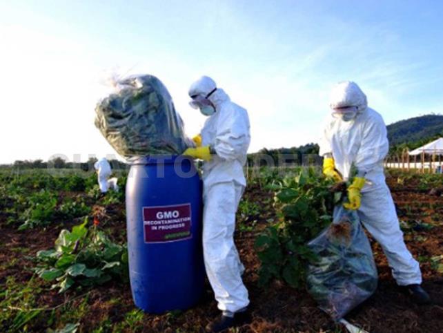 Hablan de como derrotaron a Monsanto