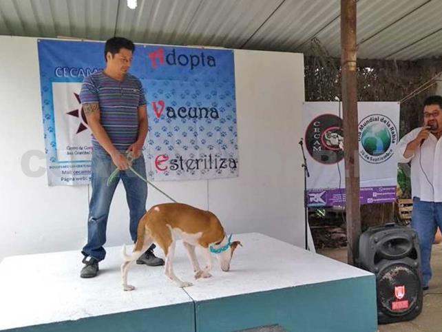 Realizan Gran Feria de la Adopción de Perros