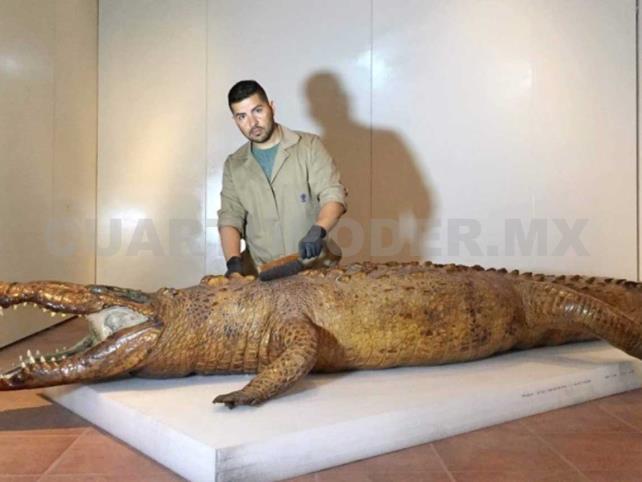 Restaurarán emblemático cocodrilo de Nayarit