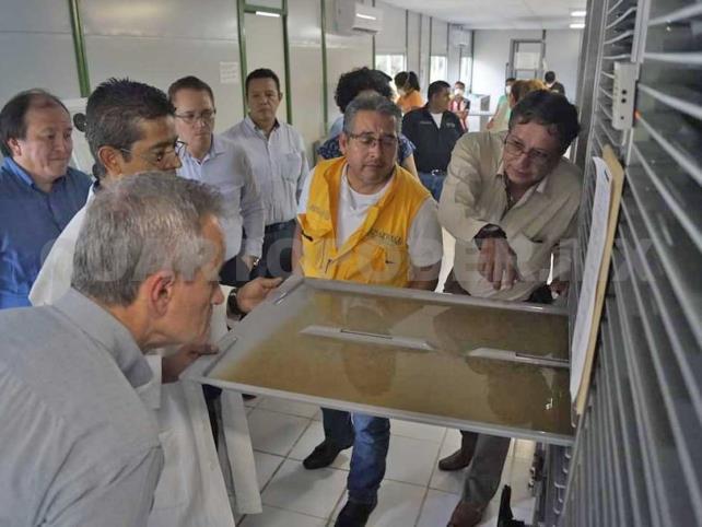 Usarán insecto estéril para combatir dengue