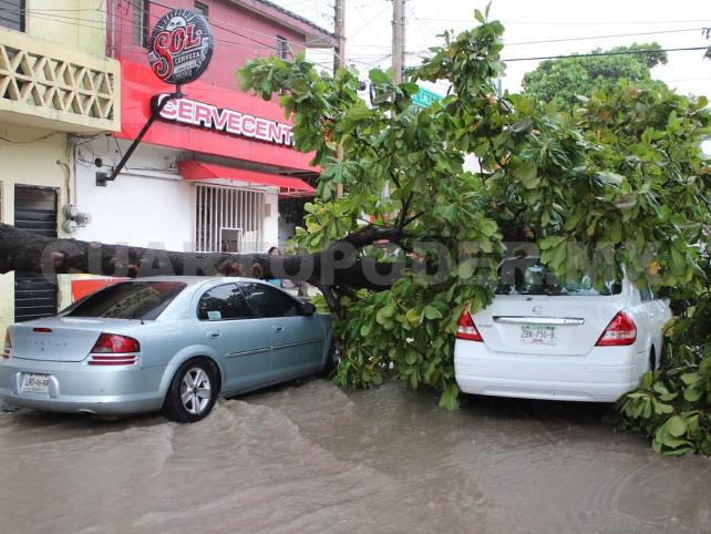 Vehículos son aplastados por árbol de almendra