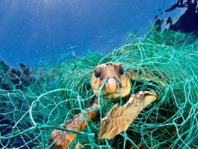 """Muerte de tortugas marinas fue por """"pesca fantasma"""""""