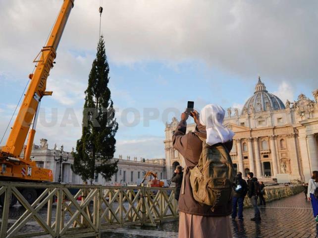 Llega árbol de Navidad gigante