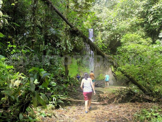 El Tren Maya necesita plan ambiental alterno