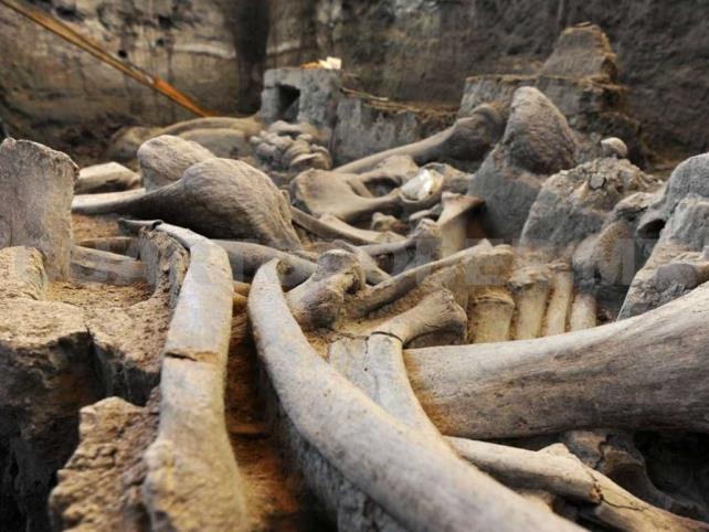 Exhiben restos de mamut de 14 mil años