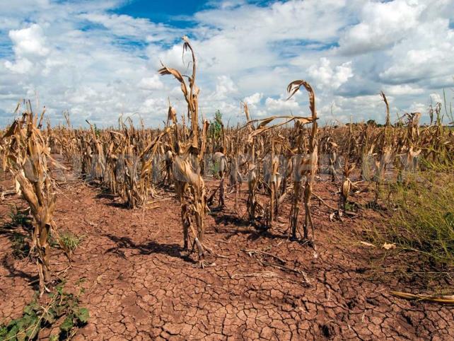 Erosión del suelo, debe ser prioridad por autoridades