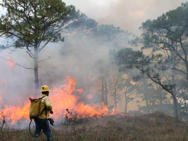 Existen  15 mil 567 alertas de incendios