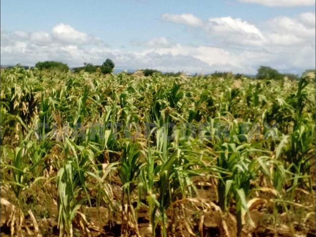 Entregan apoyos por daños causados durante sequía