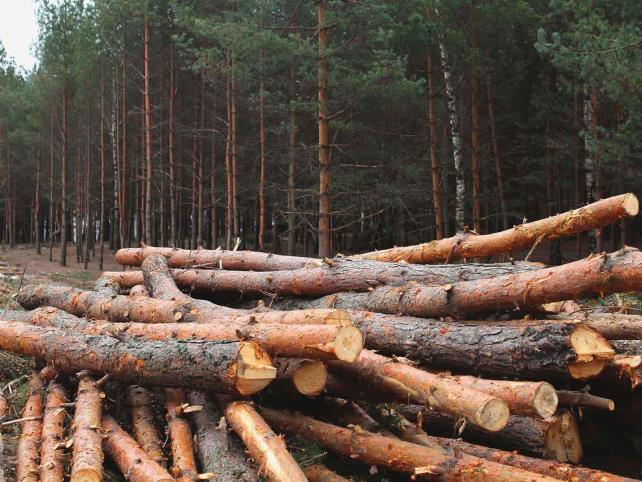El 90% de la madera en Chiapas es ilegal
