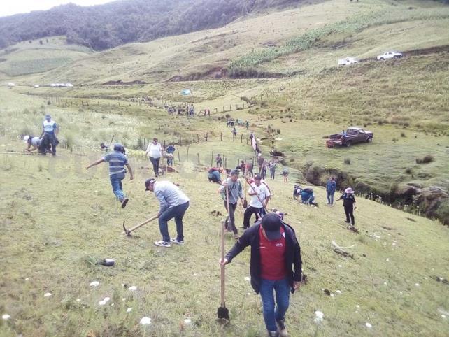 Continúa con éxito la XI Campaña de Reforestación