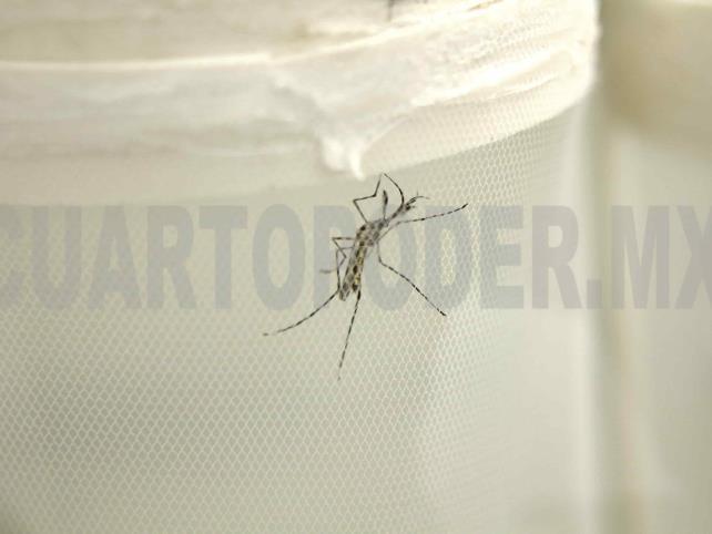 Sube a siete mil 400los casos de dengue