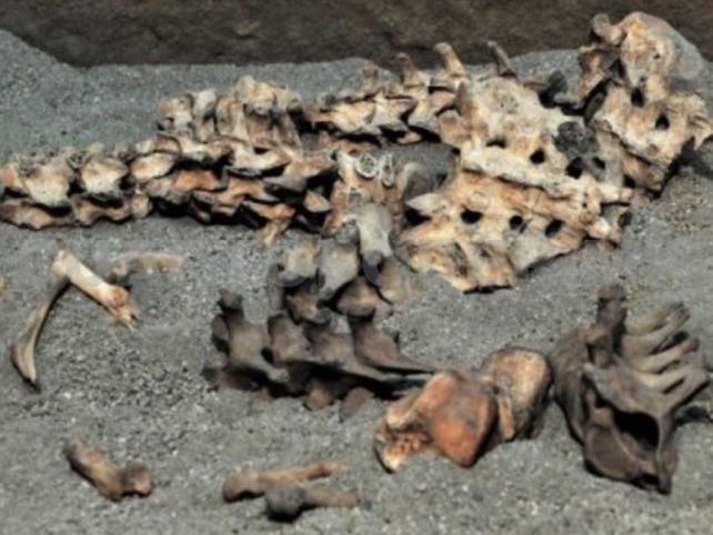 Exposición revela costumbres funerarias