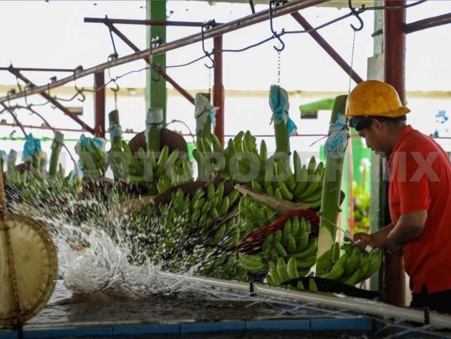 Promociona Secretaría de Turismo ruta del plátano