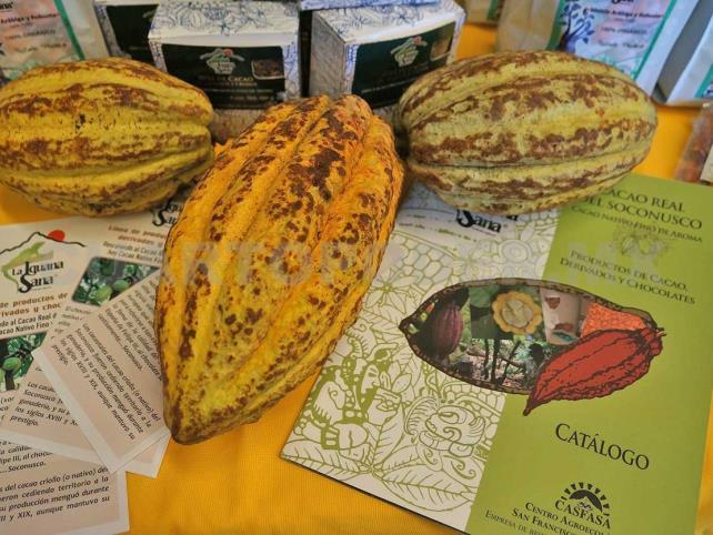 Buscan impulsar rescate del cacao en México