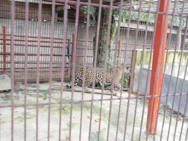 Fiscalía asegura animales exóticos; dos detenidos