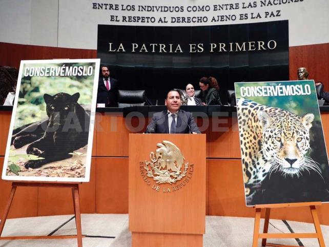 Llama Eduardo Ramírez a la conservación del jaguar