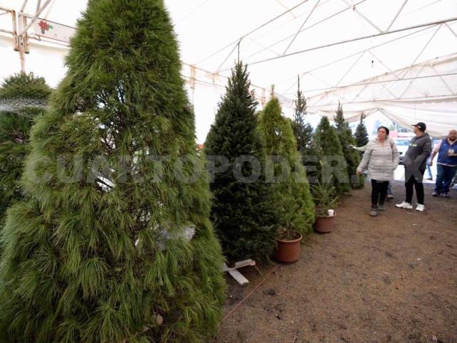 Los Altos puede abastecer demanda de árboles