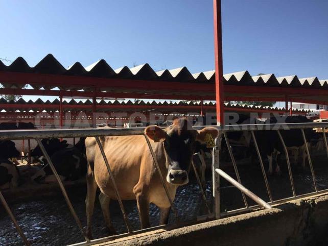 Mercado negro pega a ganaderos