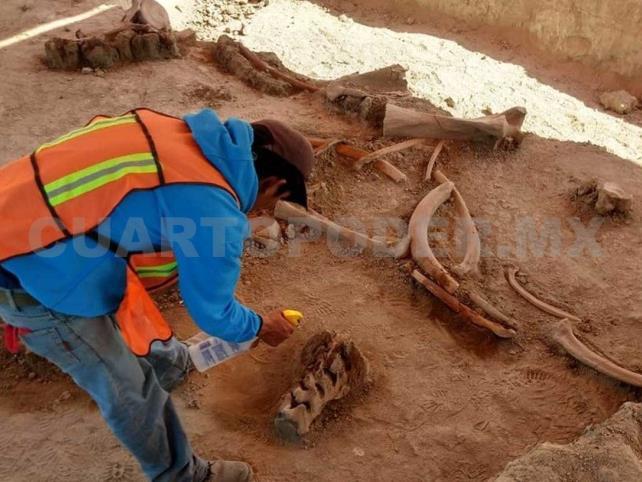 Encuentran 70 mamuts en Santa Lucía