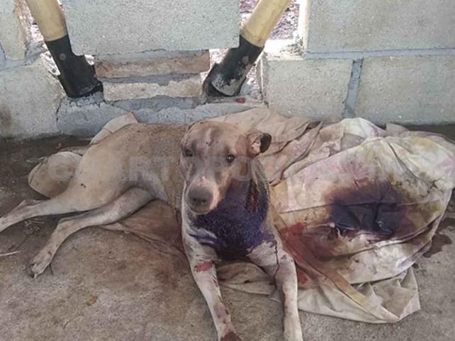 Activistas exigen penas más severas al maltrato animal