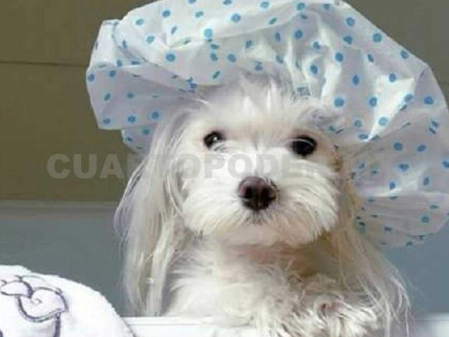 Cómo bañar a tus perros
