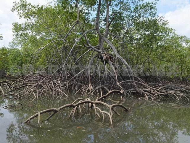 Avanza destrucción de manglares en Arriaga