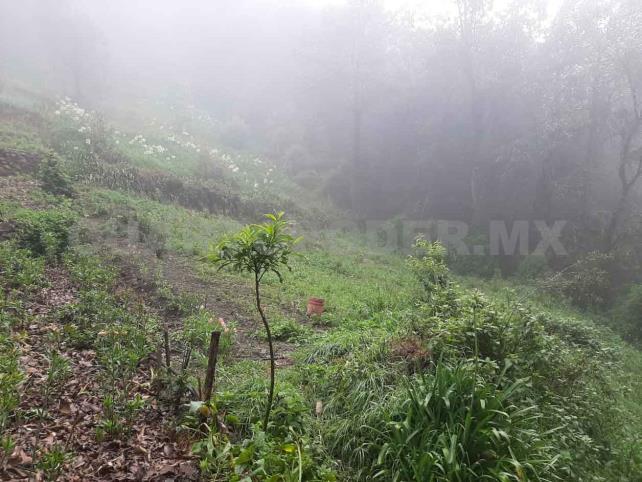 Reforestarán reserva Huitepec-Alcanfores