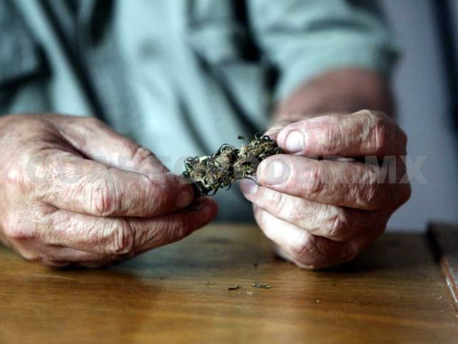 Regulación del cannabis dejaría ganancias