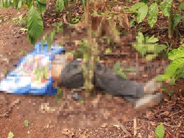 Muere chapín al caer de un árbol de coco