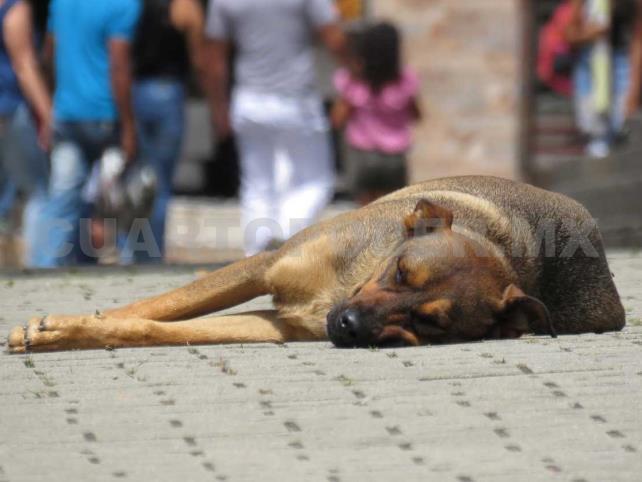 Proponen hasta 4 años de cárcel por maltrato animal